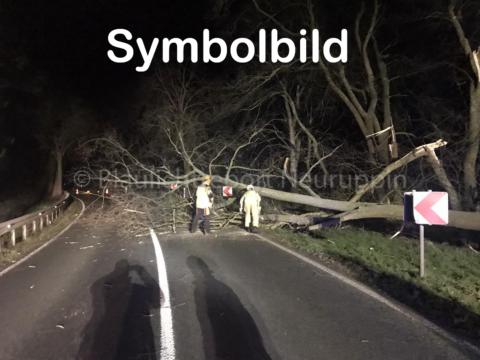 Sturm-Einsatz: Umgefallener Baum blockiert Straße in Breddin